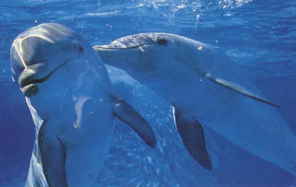 dolphinp