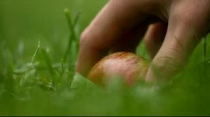 stock-footage-close-up-of-a-hand-taking-apple-from-ground-autumn-colors