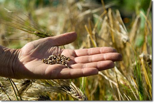 koanga_kay_baxter_hand_seeds2
